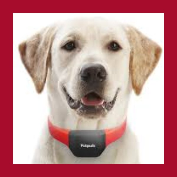 PetPuls smart collar that translates your dog's emotions